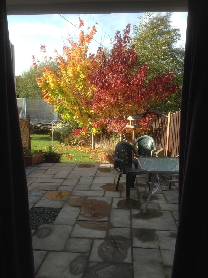 The mature patio in Autumn